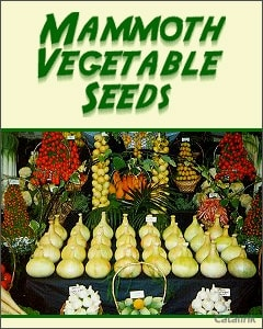 Robinsons Mammoth Vegetable Seeds